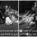 Dogs, Christmas lights
