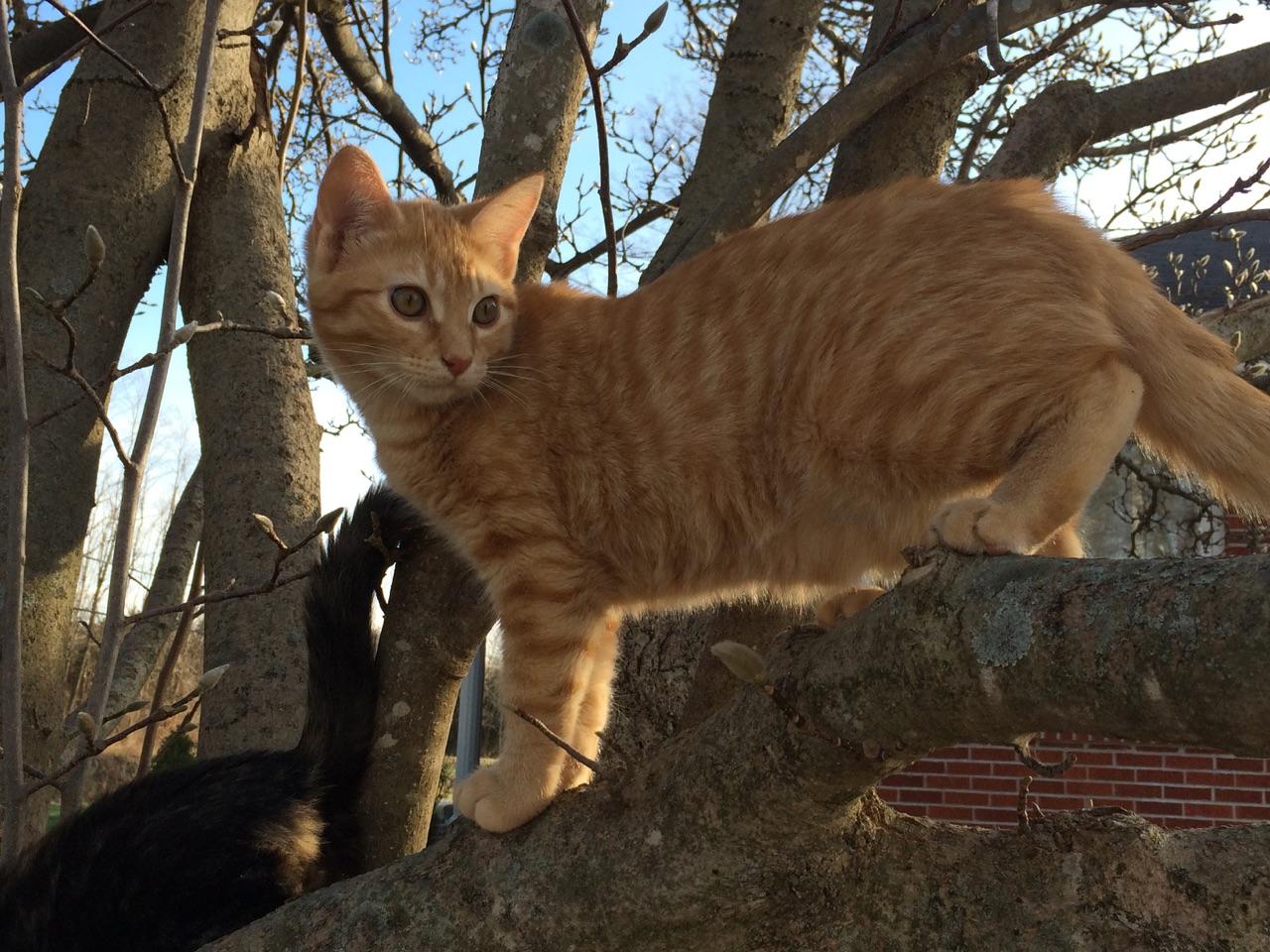 Indoor vs. Outdoor Cats | Rock Bridge Animal Hospital